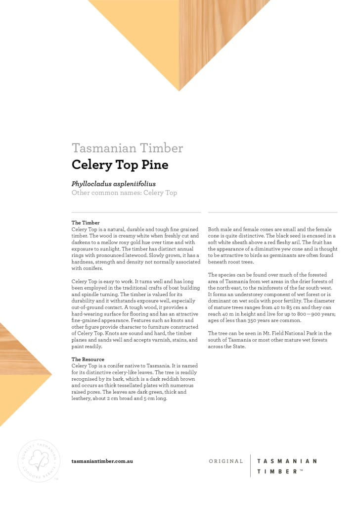 Celery Top Pine