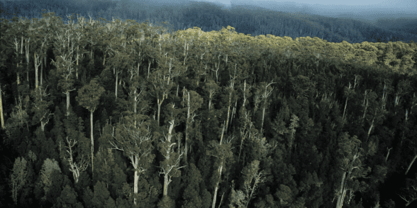 Tasmania's managed forests make a strong case for world class sustainability